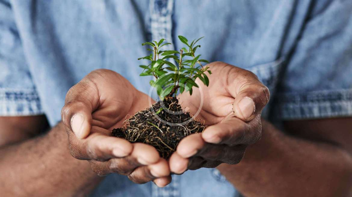How to take care of exotic plants