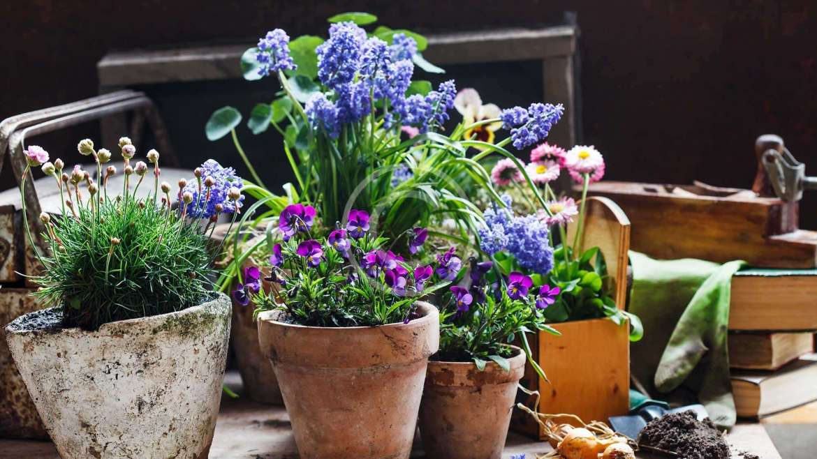 Health benefits provided by indoor plants